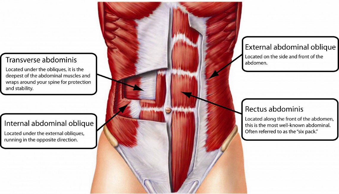 How to activate your transverse abdominal muscle - Mums going strong ...